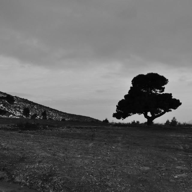 """lone tree cloudy sky"" stock image"