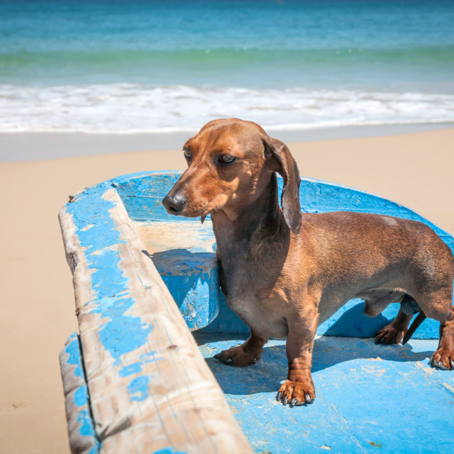 """""""Dog in the beach"""" stock image"""