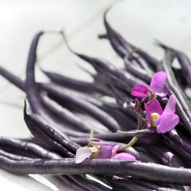 """purple beans"" stock image"