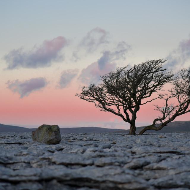 """Tree at Sunset"" stock image"