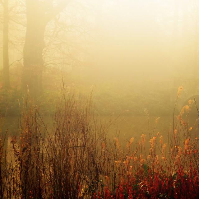"""misty Autumn glow"" stock image"