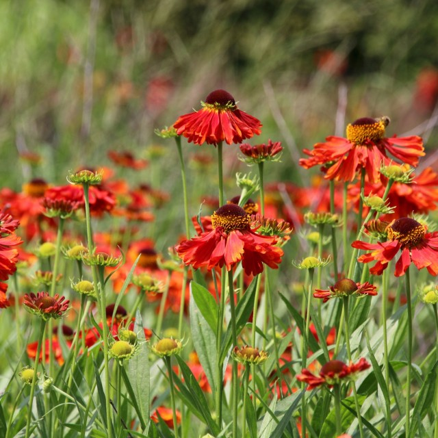 """""""Vibrant red flowers in the summer"""" stock image"""
