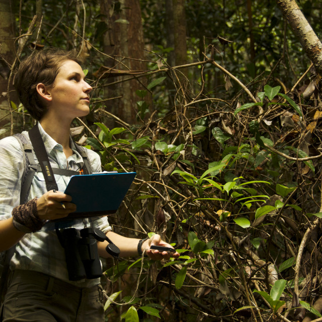 """""""Rainforest research"""" stock image"""