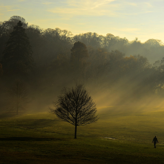 """""""come forth into the light of things let nature be your teachere"""" stock image"""