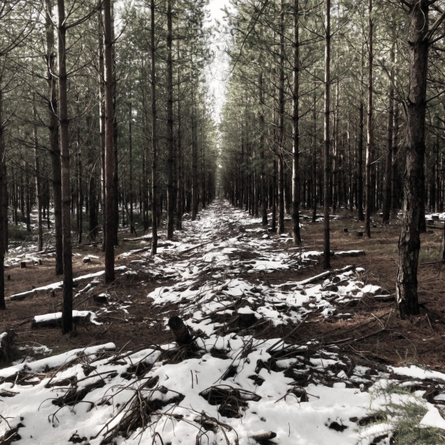 """Winter Woodlands"" stock image"
