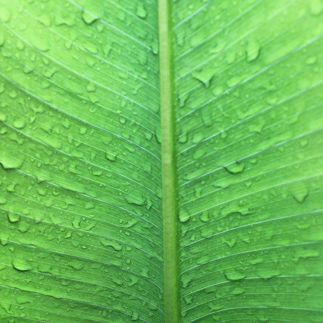 """Leaf 1"" stock image"
