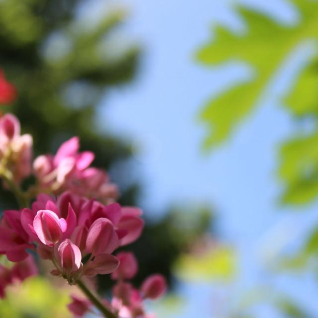 """Pink flower 3"" stock image"