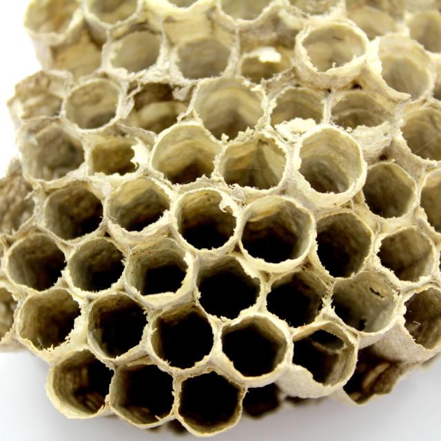 """""""Bee Hive honey"""" stock image"""