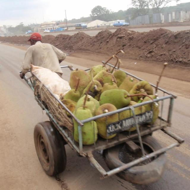 """Jack fruit delivery to African Market"" stock image"