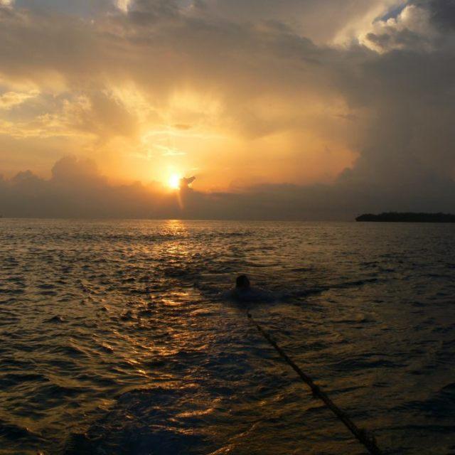 """""""Sunrise swim in the sea"""" stock image"""