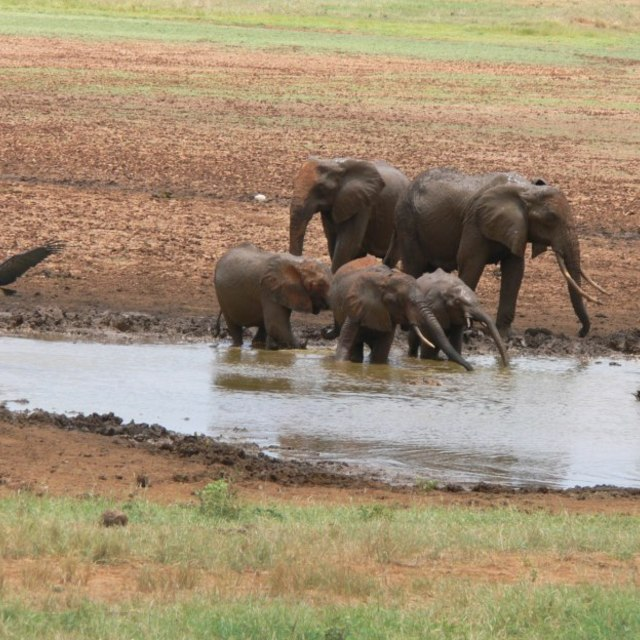 """Elephants and Marabou Storks having a drink"" stock image"