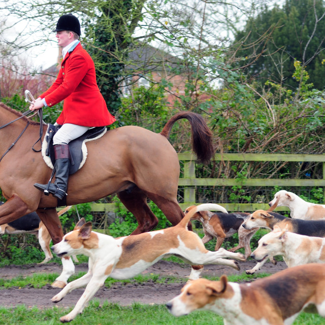 """""""Boxing Day Hunt ."""" stock image"""