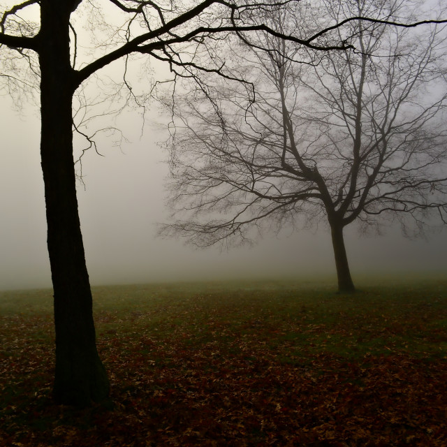"""Autumn fog hampstead-heath london uk"" stock image"