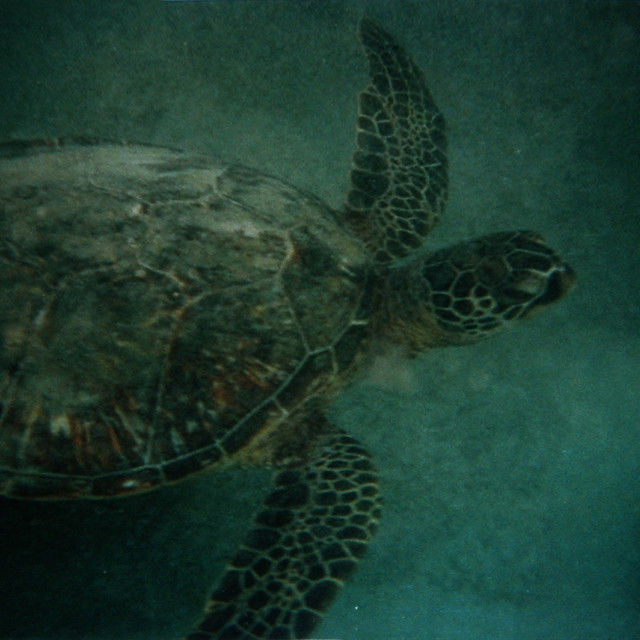 """Sea turtle"" stock image"