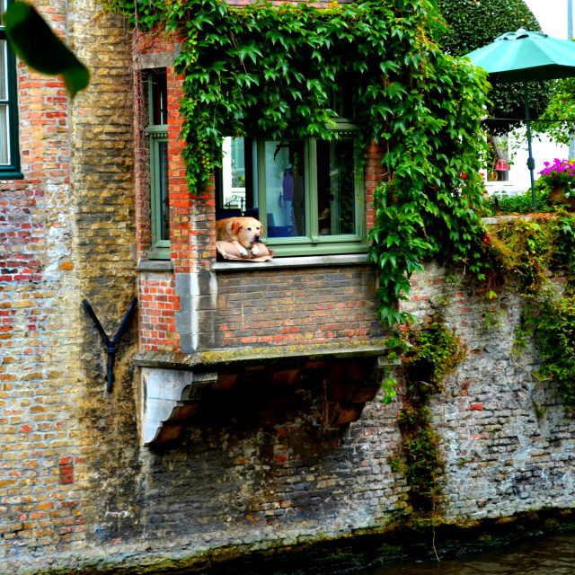 """""""The famous dog in Brugge"""" stock image"""