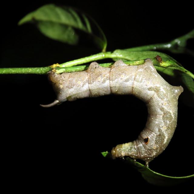 """""""Caterpillar at night"""" stock image"""