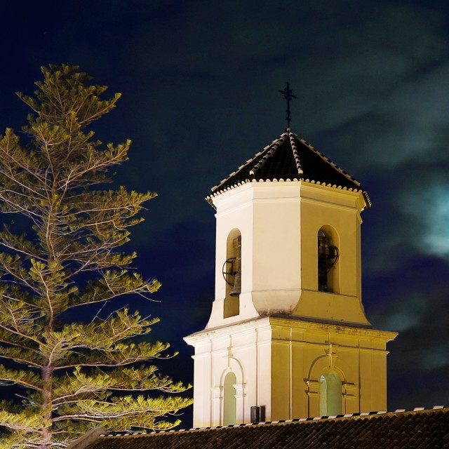 """araucaria by the church"" stock image"