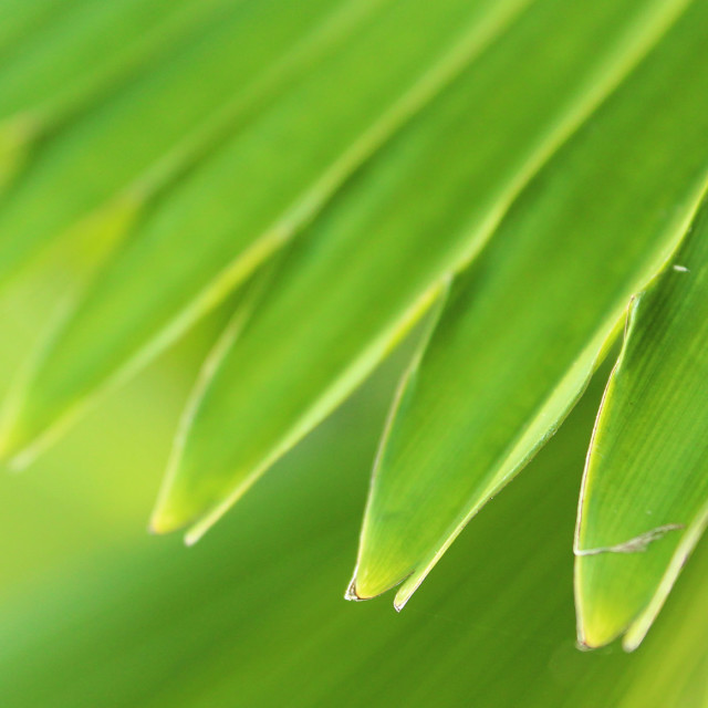 """Leaf 2"" stock image"
