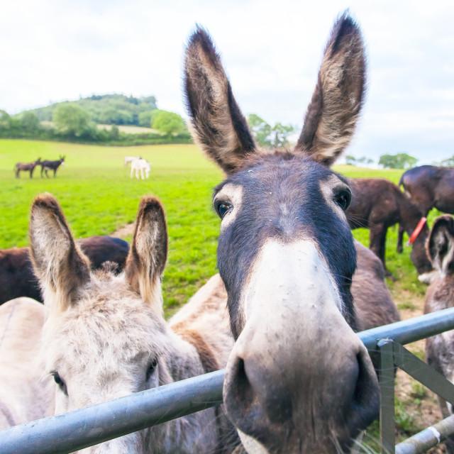 """""""Donkey's"""" stock image"""