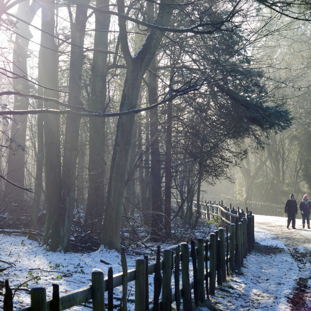 """winter Woodland Walk ."" stock image"