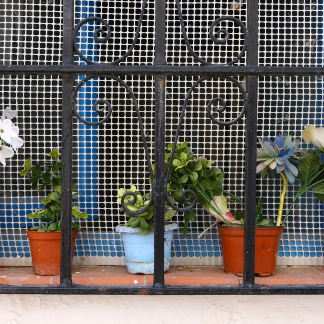 """Plants Behind Bars"" stock image"