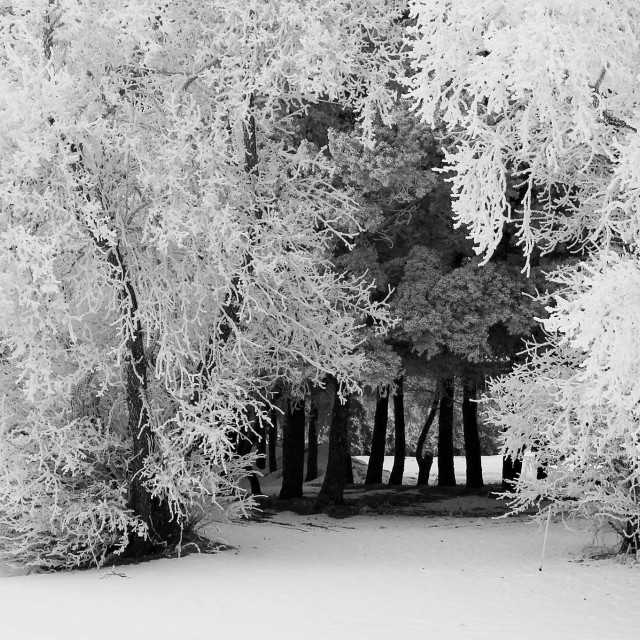 """""""Frosty Hideout"""" stock image"""