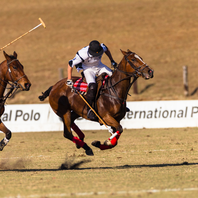 """Polo Equestrian"" stock image"