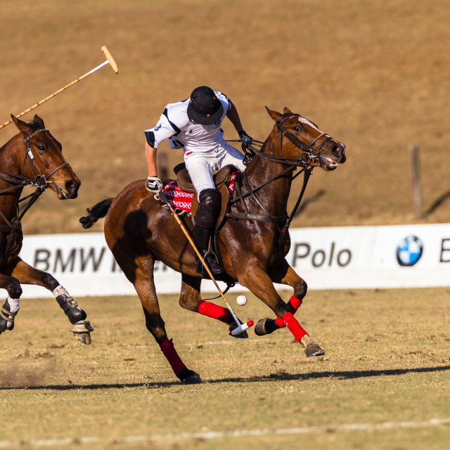 """""""Polo Horse Riders"""" stock image"""