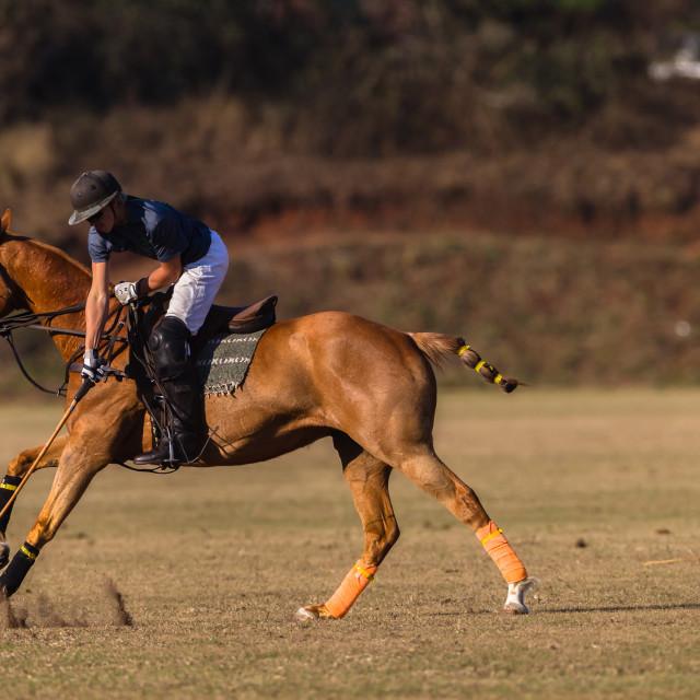 """""""Polo Rider"""" stock image"""