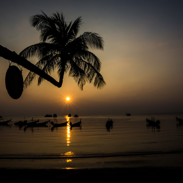"""""""Crocked palm tree in the sunset"""" stock image"""