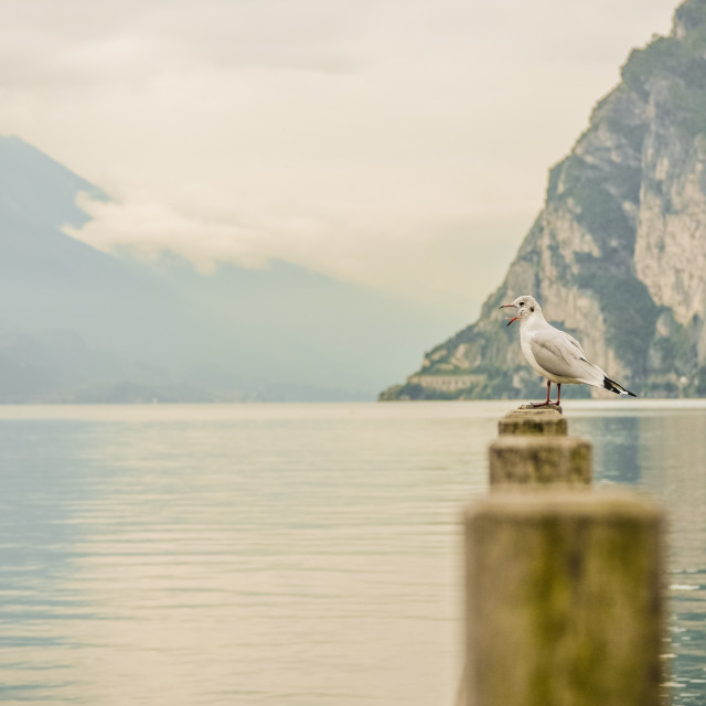 """""""Lonely Seagull"""" stock image"""