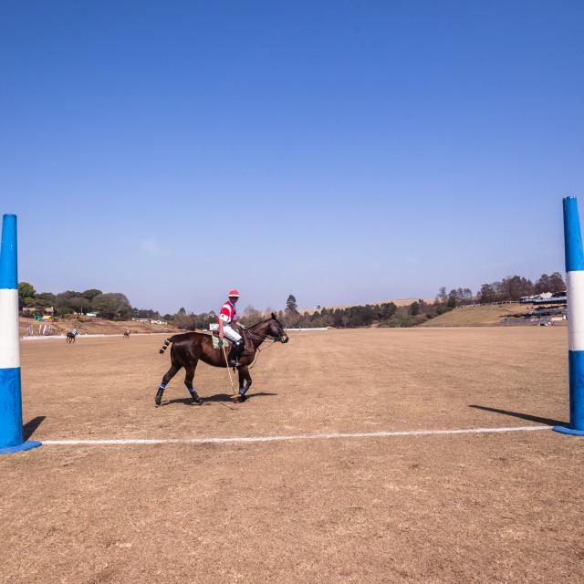 """Polo Horse Rider"" stock image"