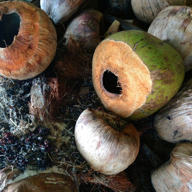 """Coconuts"" stock image"