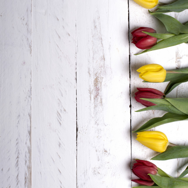 """""""Tulips on white wooden planks eves"""" stock image"""
