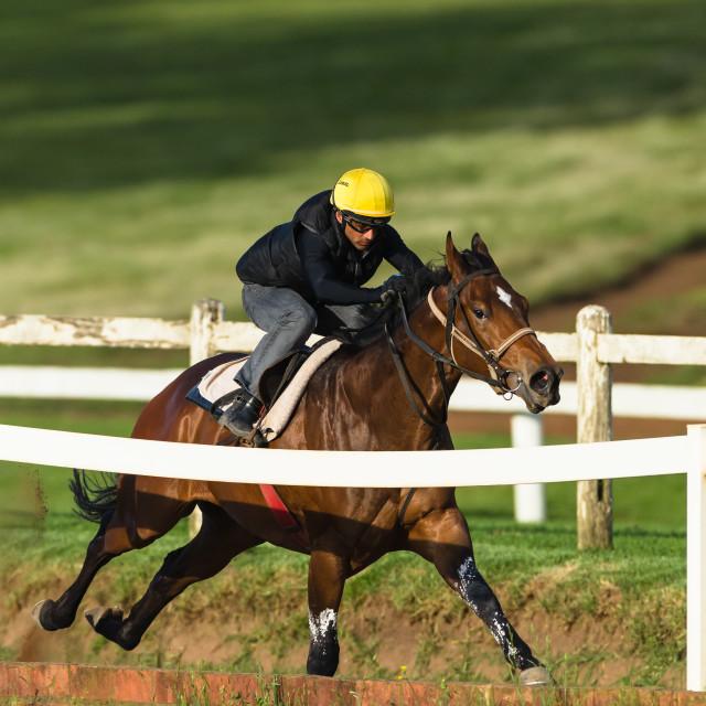 """Race Horse Jockey Training"" stock image"