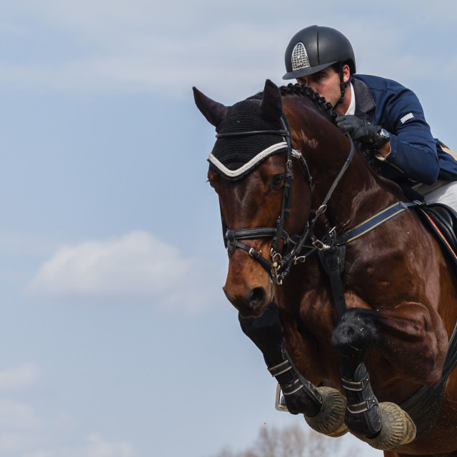 """Equestrain Horse Show Jumping"" stock image"