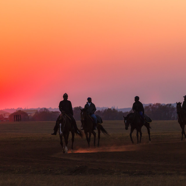 """Race Horses Sunrise"" stock image"