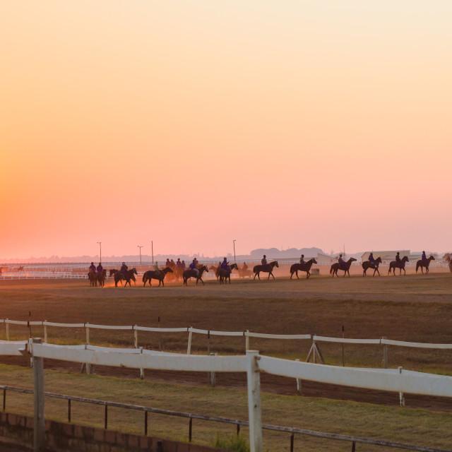 """""""Race Horses Sunrise"""" stock image"""