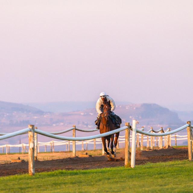 """Race Horse Training Dawn"" stock image"