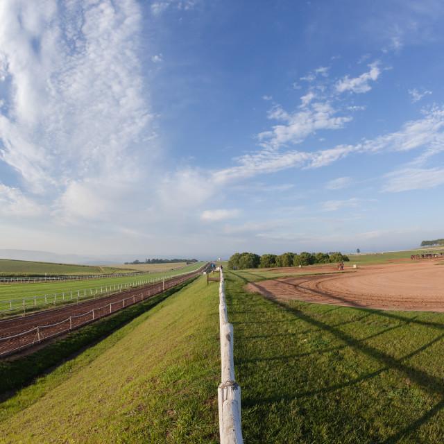 """Race Horses Landscape"" stock image"