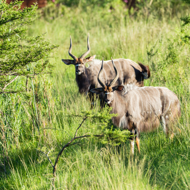 """Buck Wildlife"" stock image"