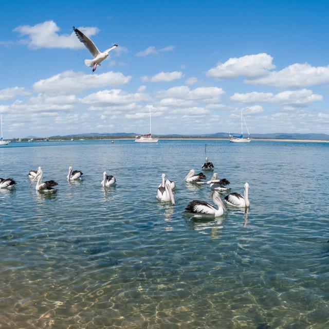 """Birds Blue Lagoon"" stock image"