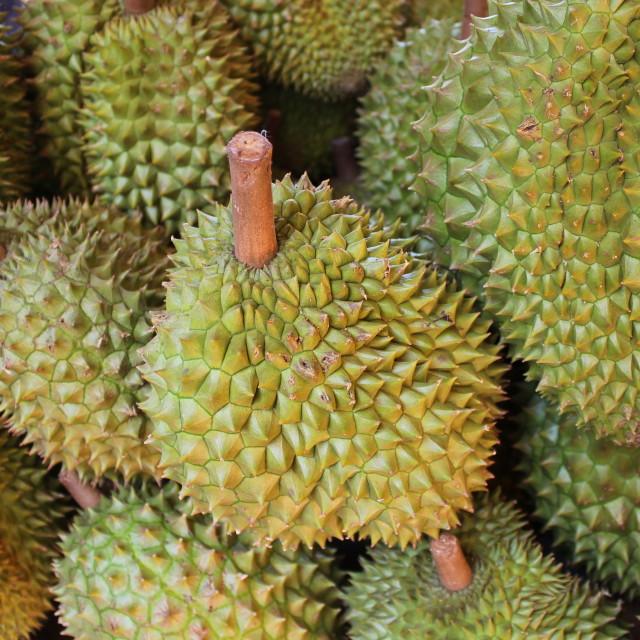"""Durian fruit"" stock image"