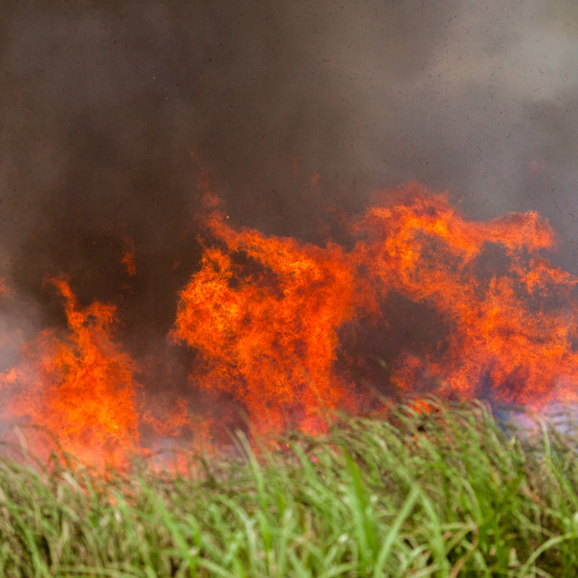 """""""Fire Crops"""" stock image"""