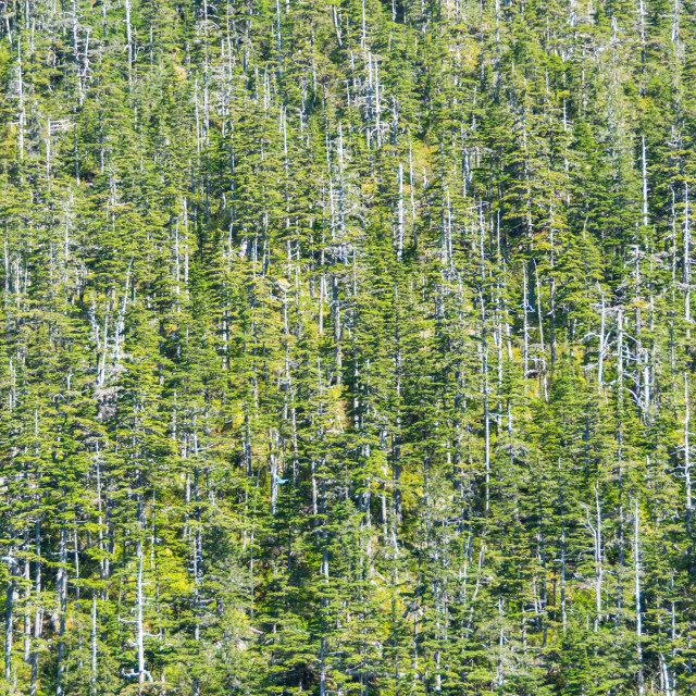 """Forest in the Climate Change"" stock image"