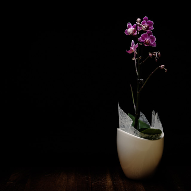 """Orchid"" stock image"