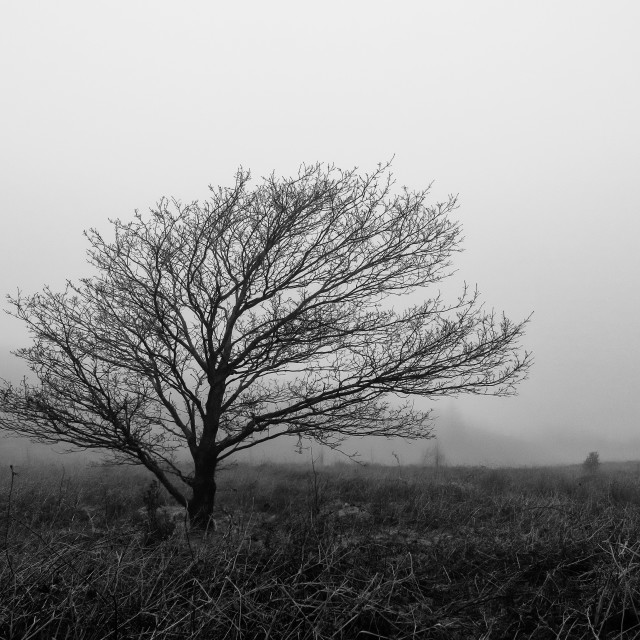 """A lone tree in the mist"" stock image"