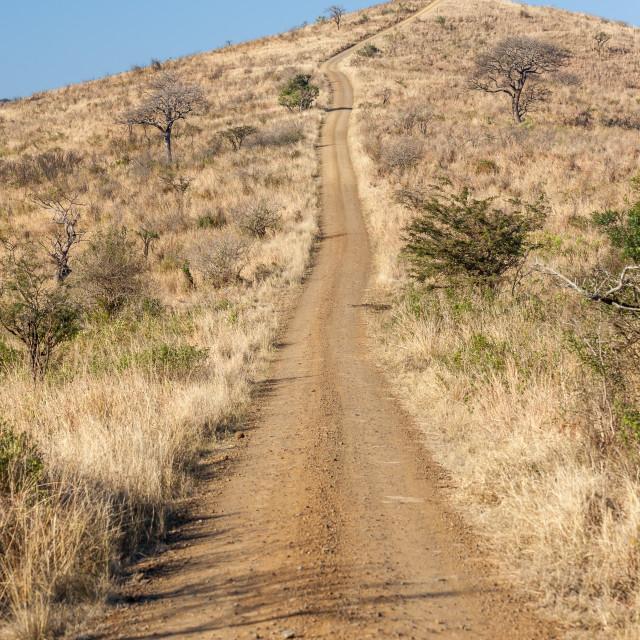 """Dirt Road Wilderness"" stock image"