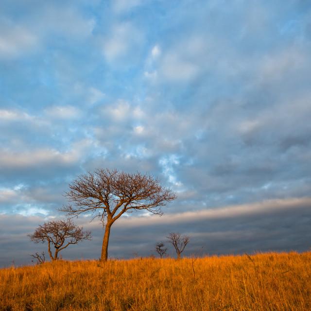 """Africa Wilderness Landscape"" stock image"