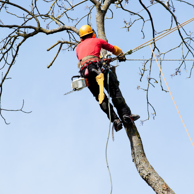 """An arborist cutting a tree with a chainsaw"" stock image"